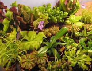 rośliny do ogrodu_8